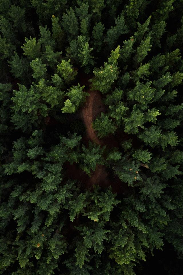 signification de arbre de vie